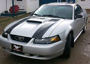 Mustang for sale