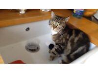 MISSING CAT - Tidworth.