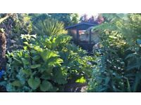 THE LADY GARDENER - Friendly experienced female gardener - I can tidy your garden - no job too small