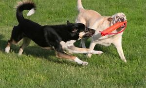 Affordable and Reliable Dog Walking & Pet Sitting Services Windsor Region Ontario image 2