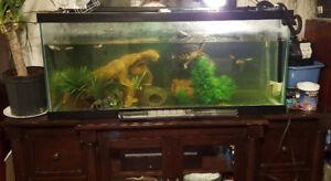 Swordtail fish and yellow slider turtle with aquarium etc