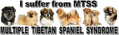 """I Suffer from MULTIPLE  TIBETAN SPANIEL  SYNDROME"" Dog Car Sticker by Starprint"