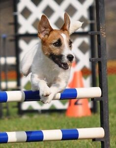 DYNAMO DOGSPORT CLASSES - AGILITY, OBEDIENCE