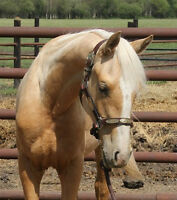 Stunning 2014 AQHA Filly. Colonel Freckles on her papers