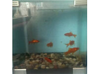 7 goldfish with tank & filter
