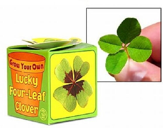 GROW YOUR OWN LUCKY IRISH IRELAND SHAMROCK FOUR LEAF CLOVER 08921