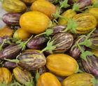 Sand Eggplant (Aubergine) Neutral Vegetable Plant Seeds
