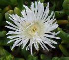 Plant Succulent Summer Cactus & Succulent Plants