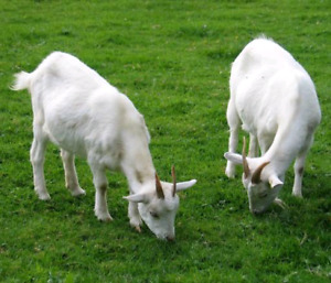 Two Goats Lawn Care