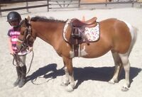 Small well schooled pony for sale