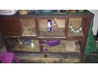 Ferrets And Hutch