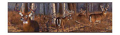 Forest Wallpaper Border (White Tail Deer in Birch Tree Forest Wallpaper Border FZ4460BD )