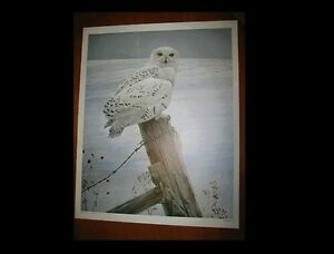 16 X 20 SNOWY OWL PRINT....Ready For The Hunt....Robert Bateman