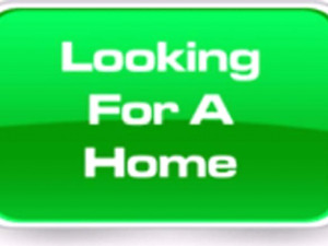 Wanting to rent or rent to own.House or Mobile home.