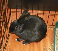 "Young Female Rabbit - Bunny Rabbit: ""Myrtle"""
