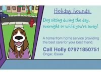Holiday Hounds dog sitting and walking in Ongar Essex