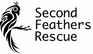 Second Feathers has room to take in more birds!