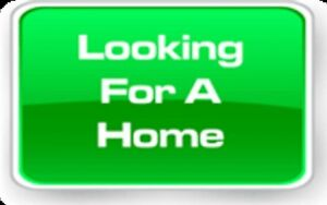 Looking for a new home to rent!!!