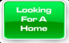 3/4 bedroom house rental wanted