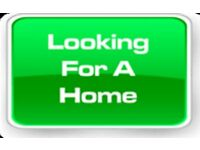 Family House wanted 2-3 beds with dss accepted