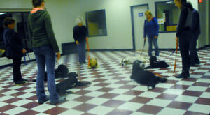 OBEDIENCE CLASSES FOR PUPS AS YOUNG AS 7 WEEKS TO CANINE ADULTS