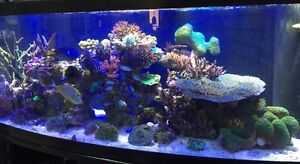 Beautiful 155 Gallon Saltwater Fish Tank--Complete System