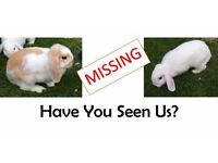 Missing Rabbits - Sheldon