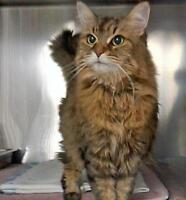 Homeless Cats in Search of Forever Homes (Save One Today)