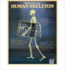 Build your own cardboard skeleton
