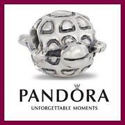 Pandora Schildkröte