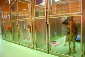 dog kennel boarding/ puppy daycare