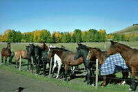 AMAZING HORSE BOARDING IN SPRINGBANK