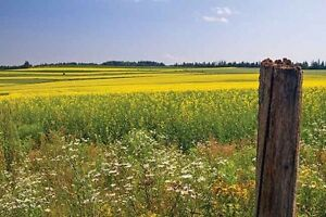 Wanted Saskatchewan Acreage plus mineral rights