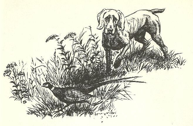 WEIMARANER - 1964 Dog Art Print - MATTED