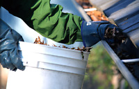 Eavestrough Cleaning & Tree Maintenance