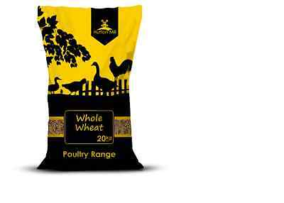 WHOLE WHEAT, CHICKEN-PIGEON-WILD BIRD FOOD-FEED