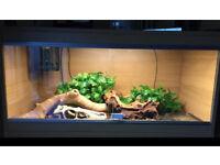 Royal python and vivarium
