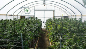 Greenhouse with MMAR license+Property+Business