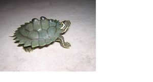 BEAUTIFUL BABY MISSISSIPPI MAP TURTLES
