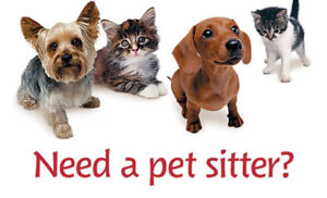 Experienced Pet Sitter - Bloor & Yonge Centrally Located!