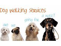 Experienced Dog Walker In Grove park and surrounding areas