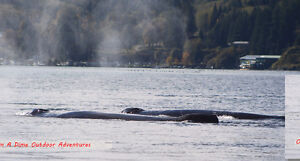 Salmon Fishing Charters! Campbell River Comox Valley Area image 9