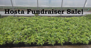 Hostas! $15 each or 3 for $30! (Fundraiser - Saturday Oct 21)