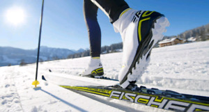 Looking for Cross Country Skis