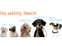 Mollie's dog walking services based in North Cardiff