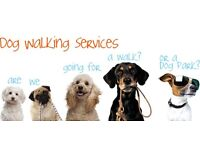 Its all about dogs. First walk half price
