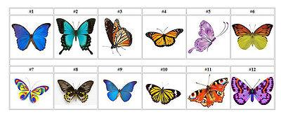 Personalized Butterfly Butterflies 1
