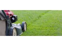 Strimming, lawn mowing and hedge trimming services