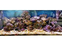 Life rocks for Marine Fish tank