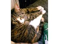 MISSING: MUCH LOVED YOUNG FEMALE TABBY, WHITE AND GINGER CAT FROM NEW CROSS/BROCKLEY AREA